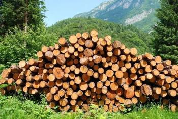 Дерево для сруба