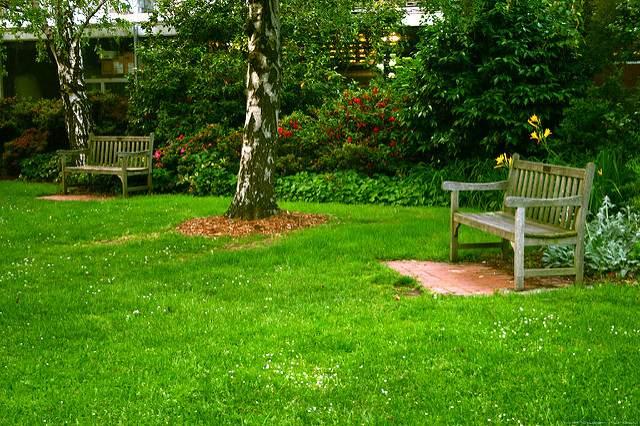 lawn-grass