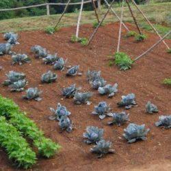 Удобрения для огорода: альтернативные варианты или химия?